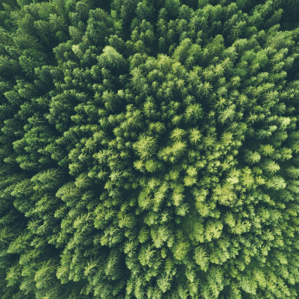 Eco Conscious Business