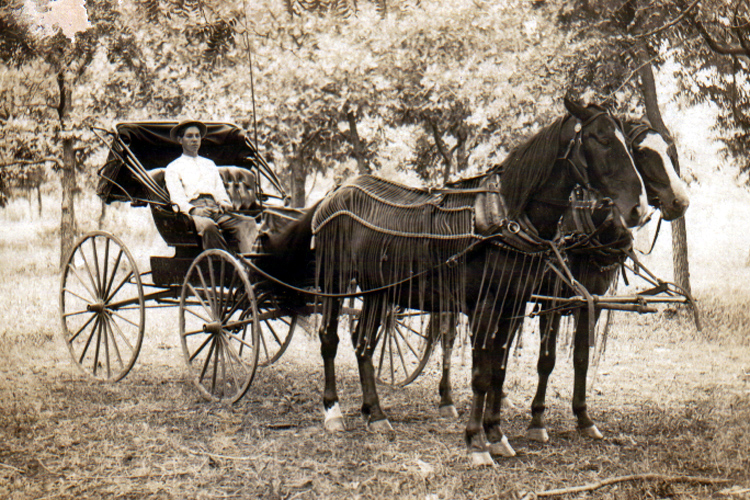 horse-drawn buggies